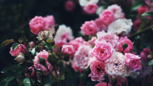 fleur traditionnelle
